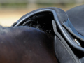 Saddle shown on high withered horse